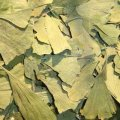 Ginkgo Biloba Leaves 50 g - Herba Center
