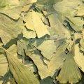 Ginkgo Biloba Leaves 50 g - Herba Center