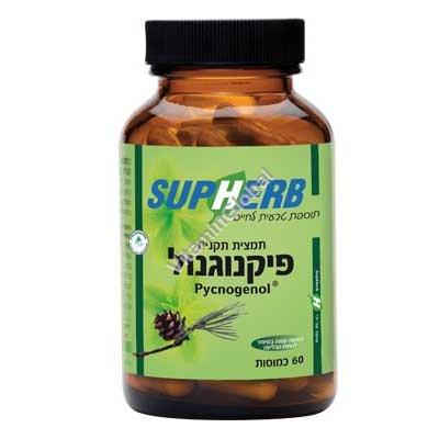 Kosher L\'Mehadrin Pycnogenol 30 mg 60 caps - SupHerb