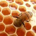 Certified Organic Honey