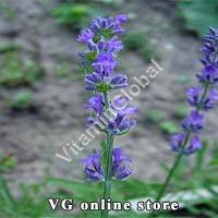 Lavender 50g - Herba Center