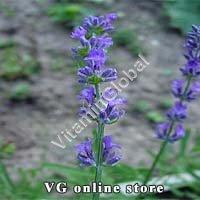 Lavender Flowers 50g - Herba Center