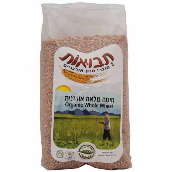 Organic Whole Wheat 1kg - Tvuot